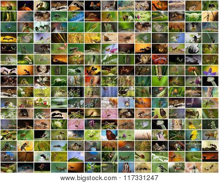 collage of photos of insects