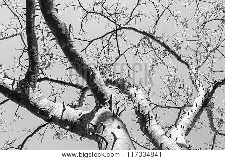 Black & white tree branches nature abstract
