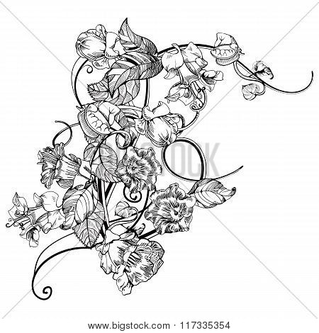 Vintage elegant flowers. Black and white vector illustration. Kobe flower. Botany.