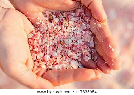 Close up of a young woman holding pink shells in her hands. Pink sand beach on Barbuda island in Caribbean made of tiny pink shells.