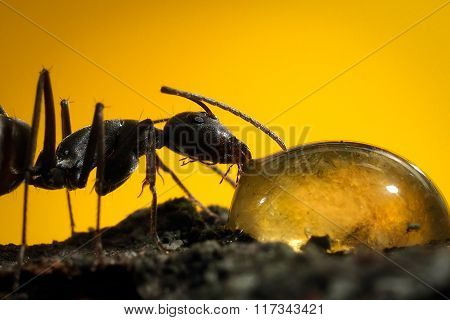 Portrait of an ant on a yellow background