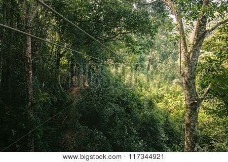 Zip line In The Jungle