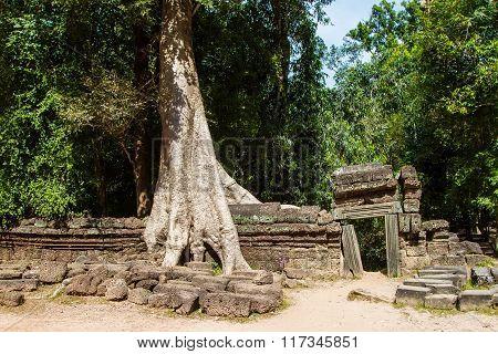 Ta-prom Temple, Angkor, Cambodia