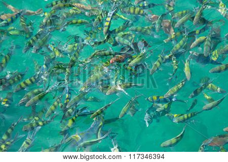 Tropical fish near the water surface in the Andaman Sea coast of Thailand