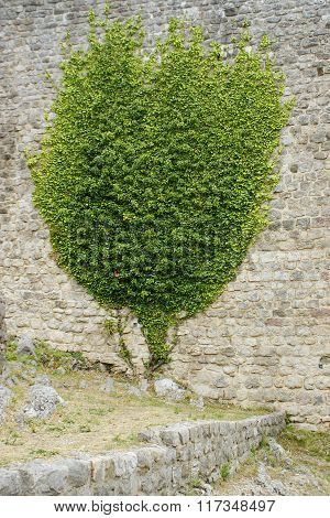 Wall With Growing Green Plant On It
