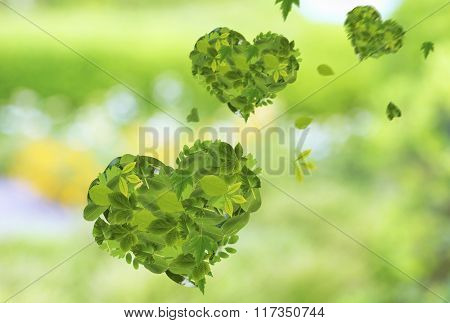 Hearts of different  green  leaves, on nature background