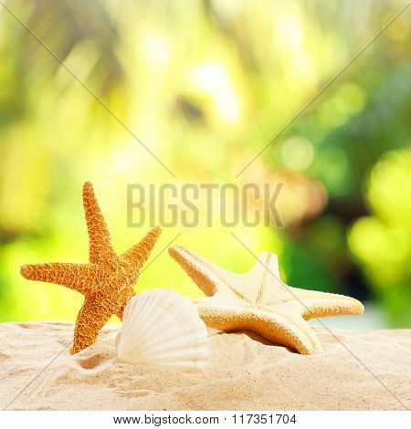 Starfishes and shells on sand against blurred nature background