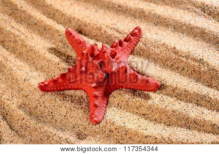 Sea Star On The Sandy Beach