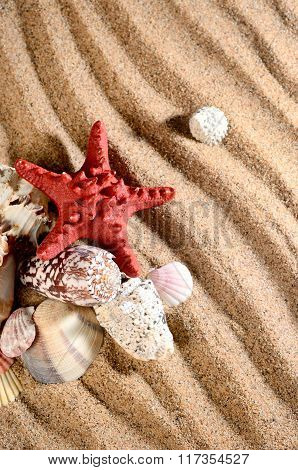 Sea Star And Shells On The Sandy Beach