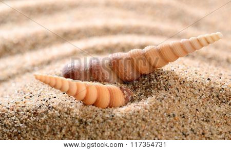 Cone shape sea shells on the sandy beach