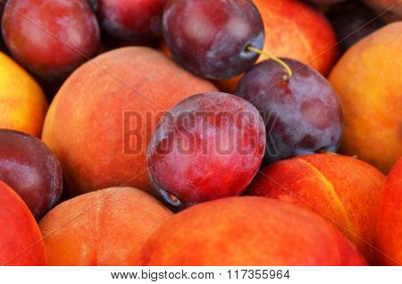 Plum And Peach
