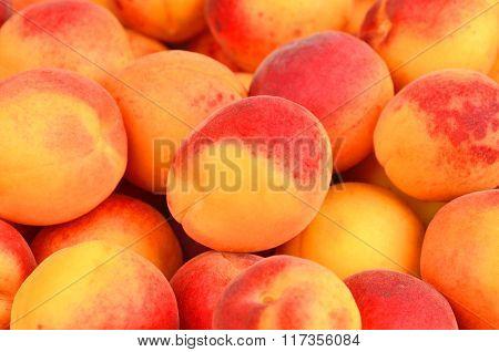 Apricot, Close Up