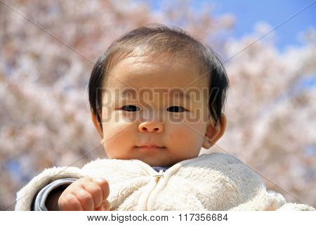 Japanese baby boy (0 year old) and cherry blossoms in early spring of Japan