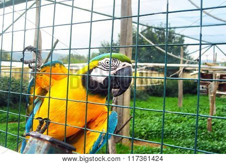 yellow parrot in the zoo