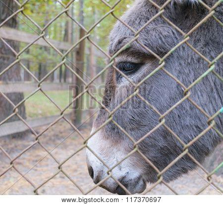Head Of Donkey Behind Bars In A Zoo