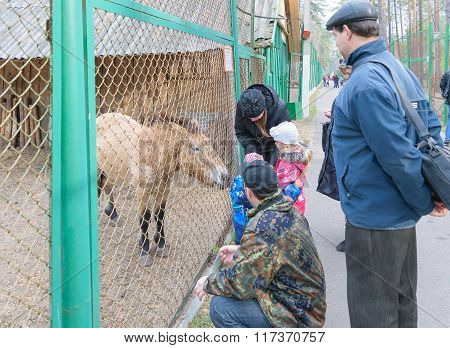 Children With Parents Feed The Animals In The National Park