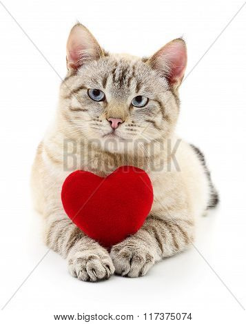 Cat With Red Heart.