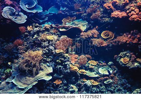 Tropical Aquarium With Small Fishes And Corals