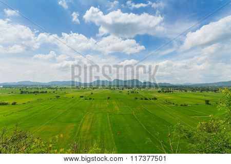 Image Of Green Rice Field With Blue Sky In Countryside