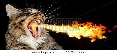 Fire-breathing Cat