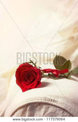 Single red rose for Valentine's Day