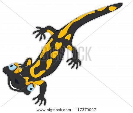 Cheerful Salamander