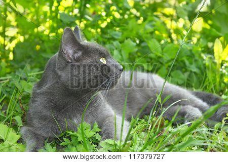 Gray Cat Lying On Green Grass
