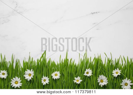 white daisy flowers in green grass on marble background