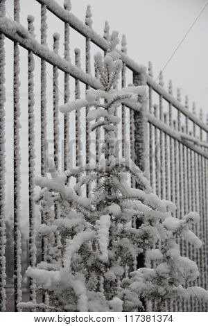 Fencing from metal, a fur-tree under snow, frosty cloudy day