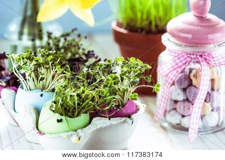 Healthy Eating, Sprouts In Easter Egg Shells.