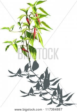 illustration with red hot chili pepper isolated on white background