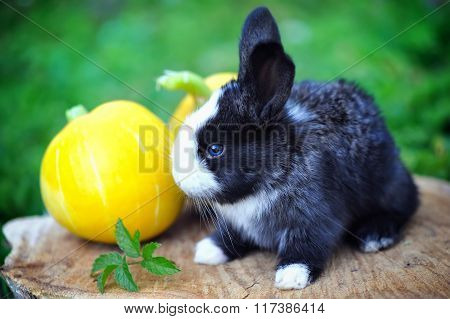 Funny Baby Rabbit With A Pumpkin On A Stump