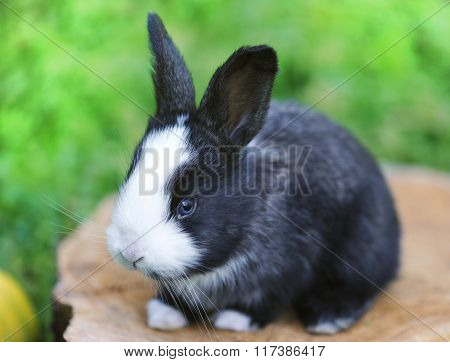Funny Baby Rabbit On A Stump