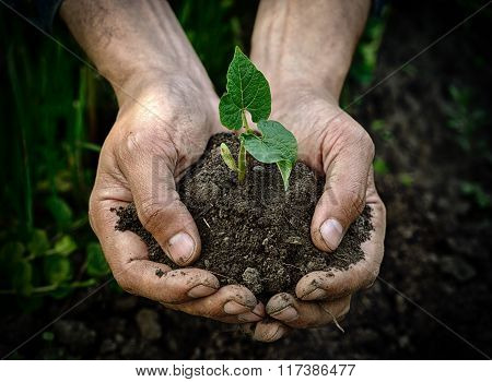 Farmer Hands Holding Young Plant With Soil