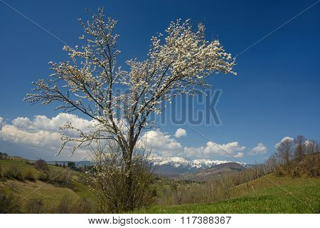 Landscape With Blossom Tree