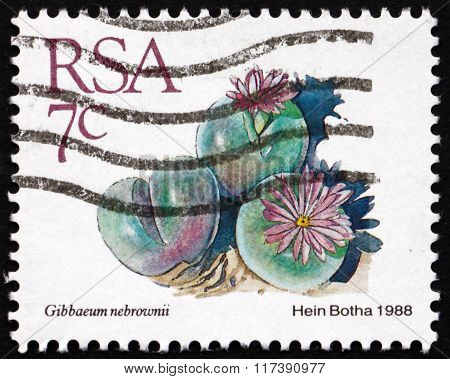 Postage Stamp South Africa 1982 Gibbaeum Nebrownii, Succulent Pl