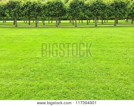 Park With Green Lawn And Linden Trees
