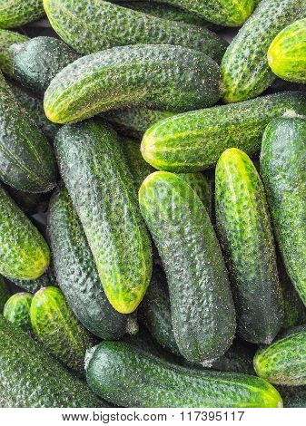 Fresh Green Cucumbers Background