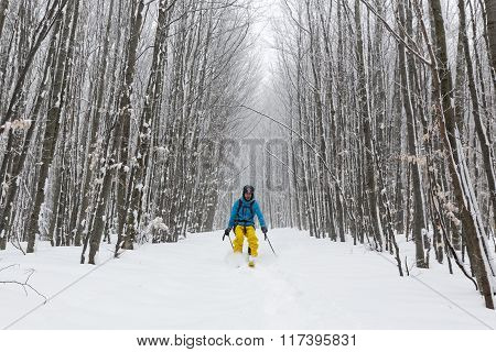 Skiing In The Forest
