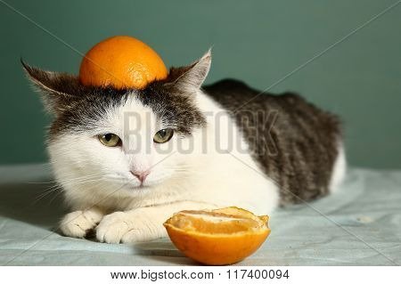 Siberian Cat In Funny Orange Hat