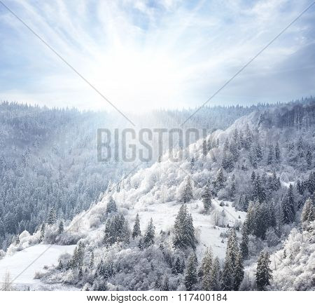 Snowy forest covered in snow on the hillside