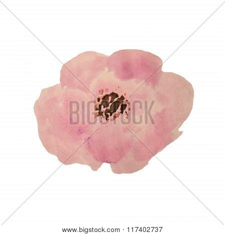 Beautiful watercolor tea rose on white background
