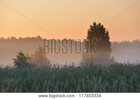 Morning Fog Above The Field In Countryside Area