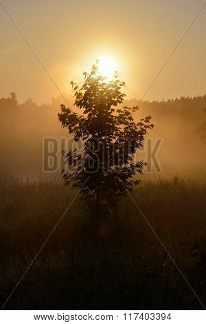 Sun And Morning Fog Above The Field In Countryside Area