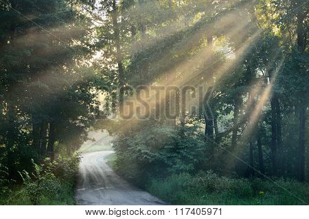 Bright morning sunbeams shining through trees over a rural road