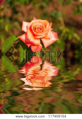 Water Ripple and reflections of Flora