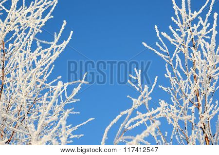 Frame of tree branches covered with hoar-frost in winter