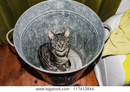 Young Tabby Cat Sitting In Empty Garbage Bin. High Angle View.