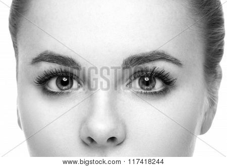 Eyes Woman Eyebrow Eyes Lashes Black And White
