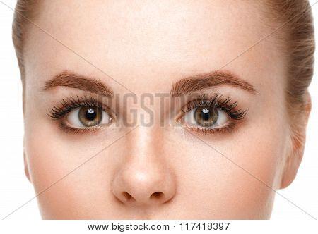 Eyes Woman Eyebrow Eyes Lashes.